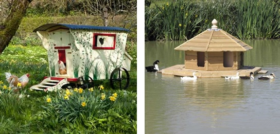 Chicken Coop and floating duck lodge